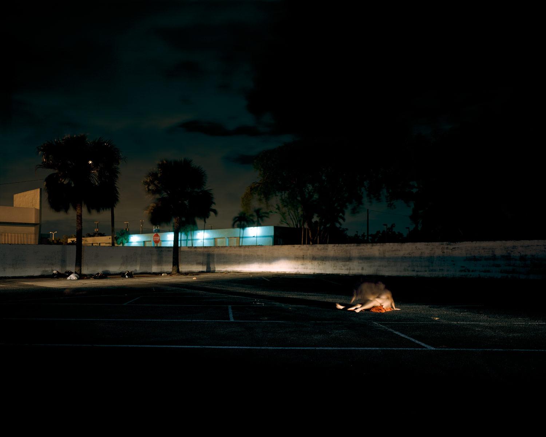 Nocturnal#16.jpg