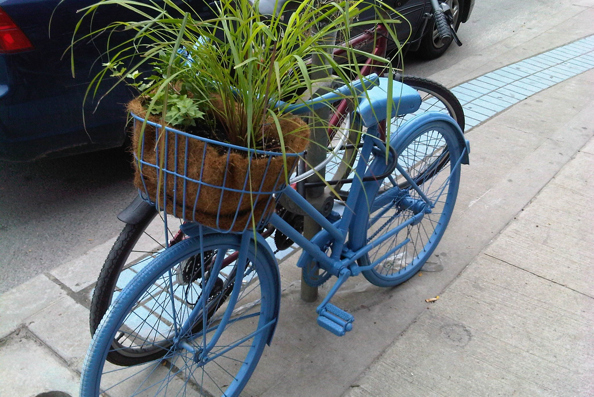 Bikes and plants