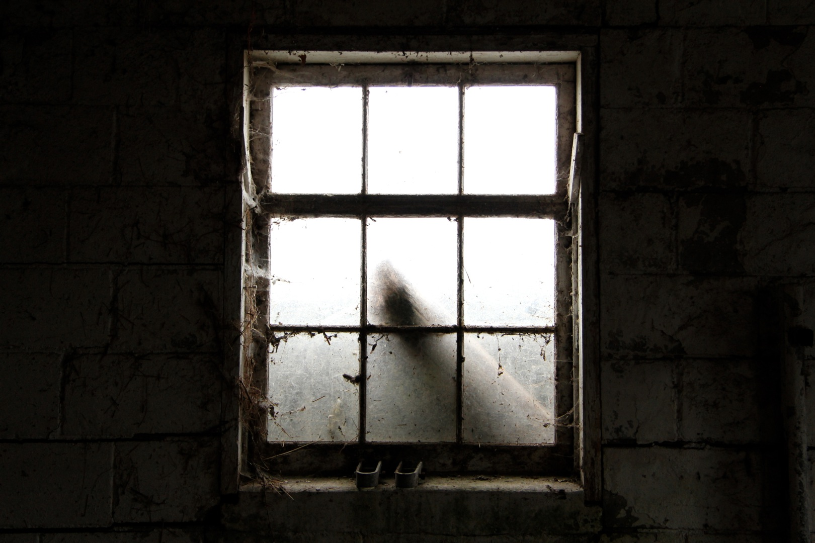 IMG_8182-window