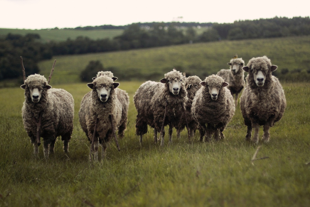 Don't be a sheep - Blaze your own trail