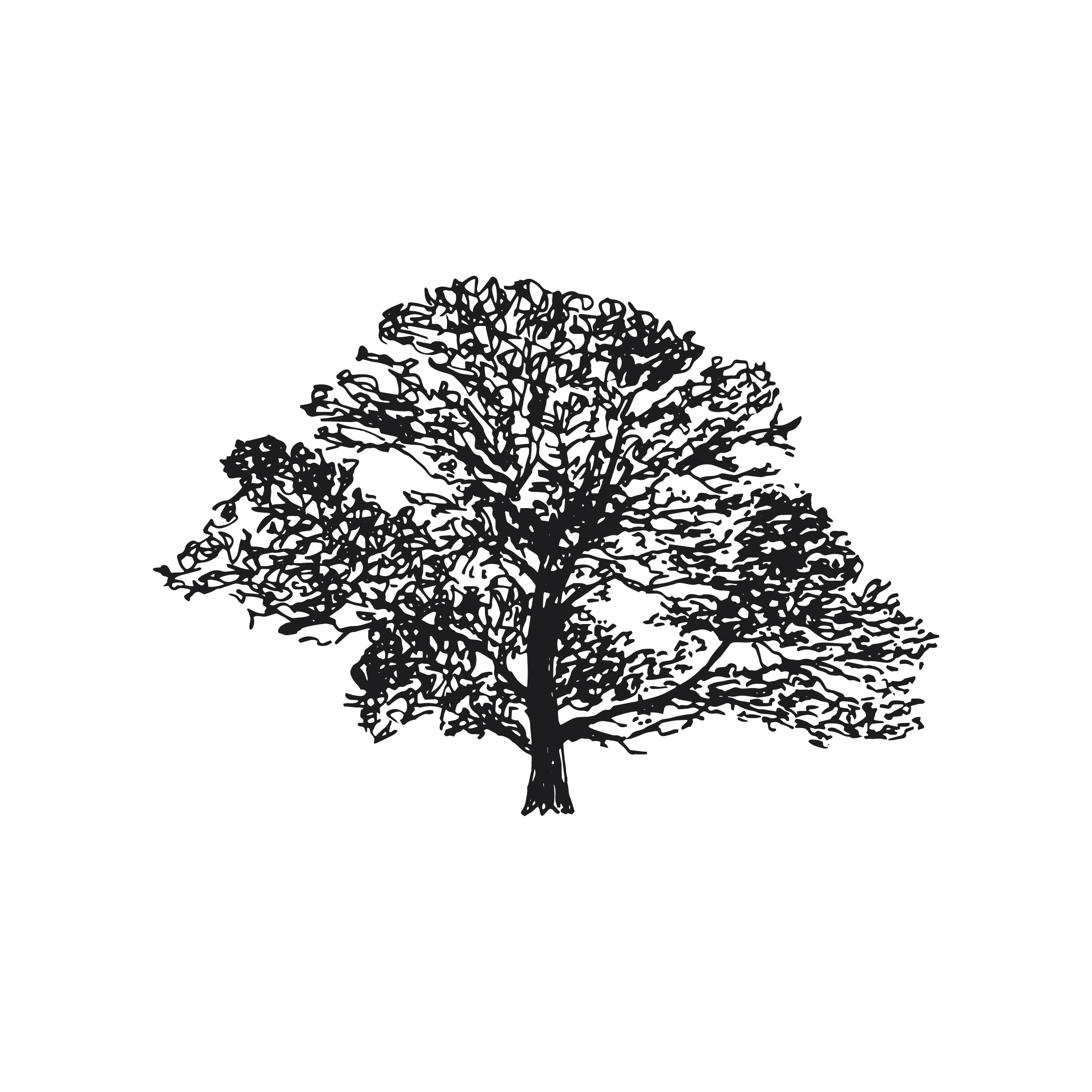Down to Earth tree surgeons Sevenoaks, logo design and brand identity by Ditto Creative, branding agency Kent