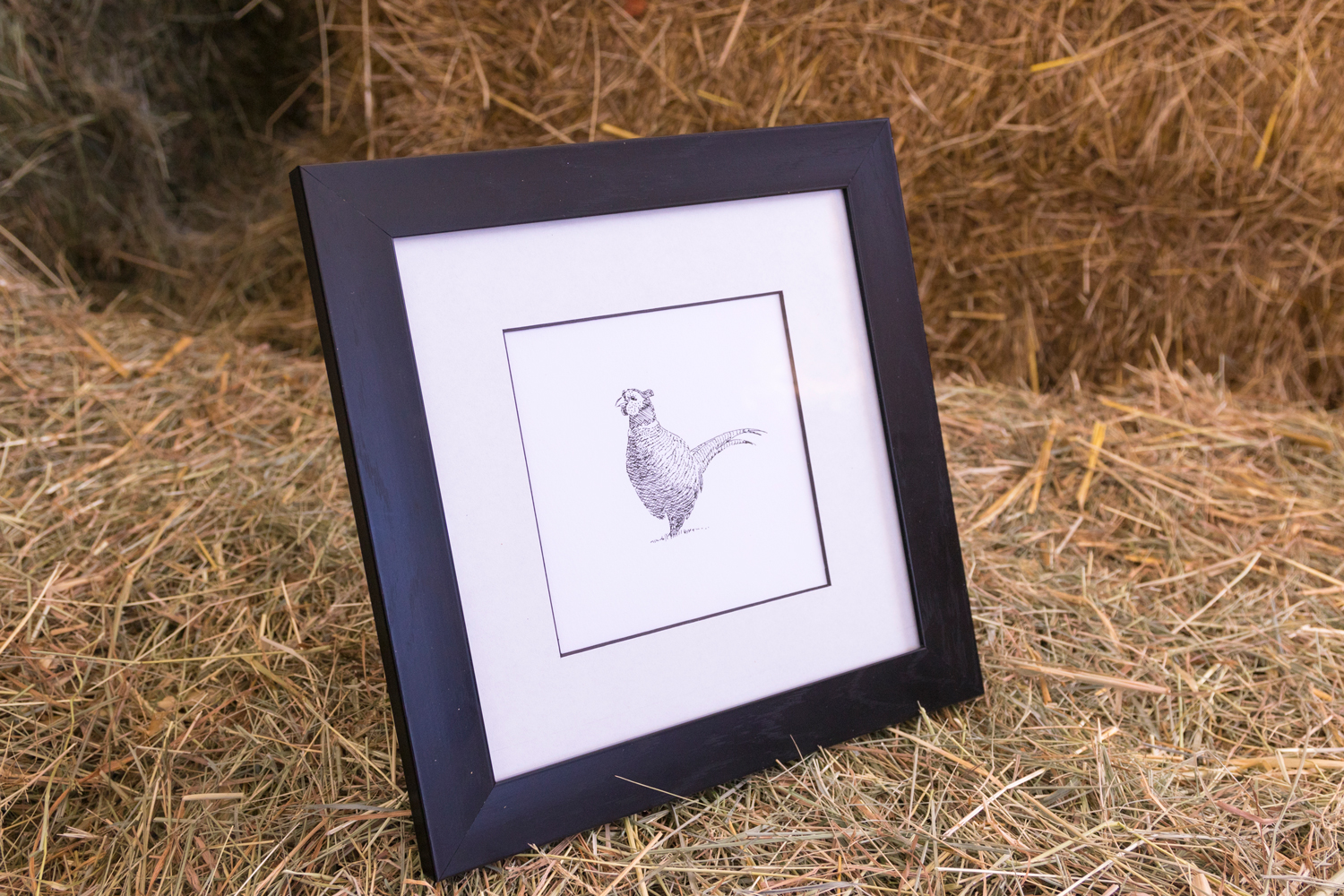 From The Oast, pheasant illustration by Derek Griffin