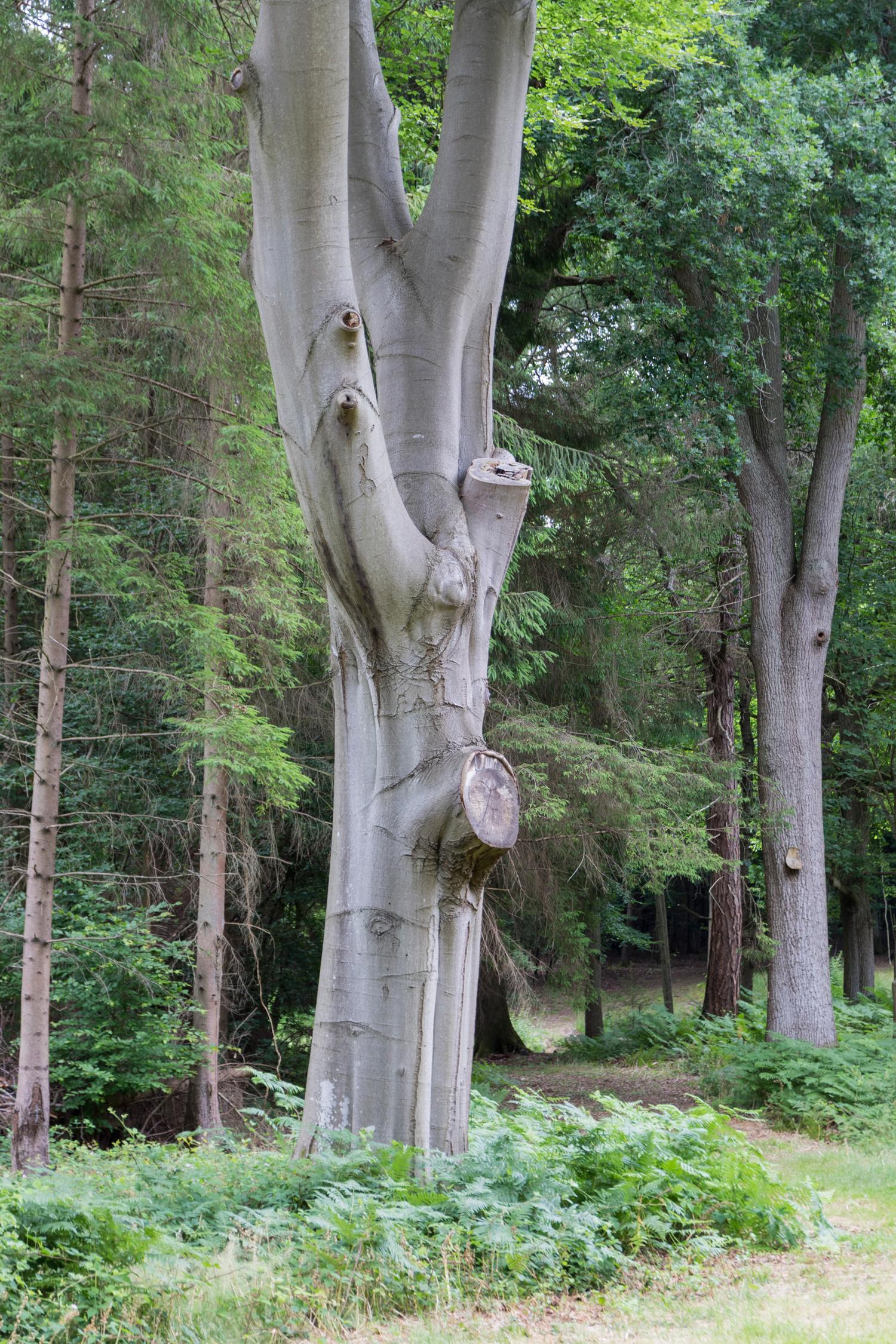 tree-resized.jpg