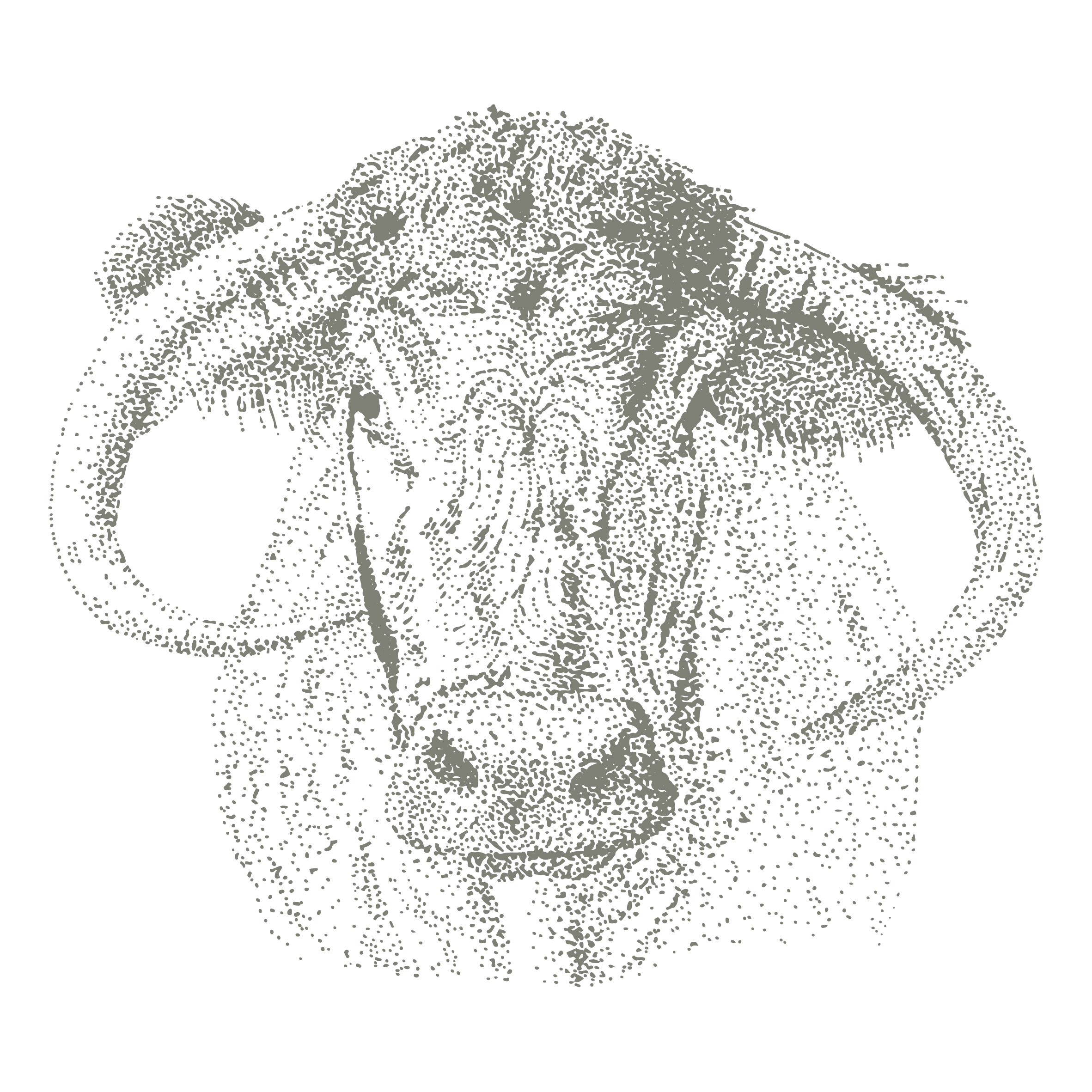 longhorn cattle illustration for the pure meat company branding by ditto creative, branding agency for small businesses in kent