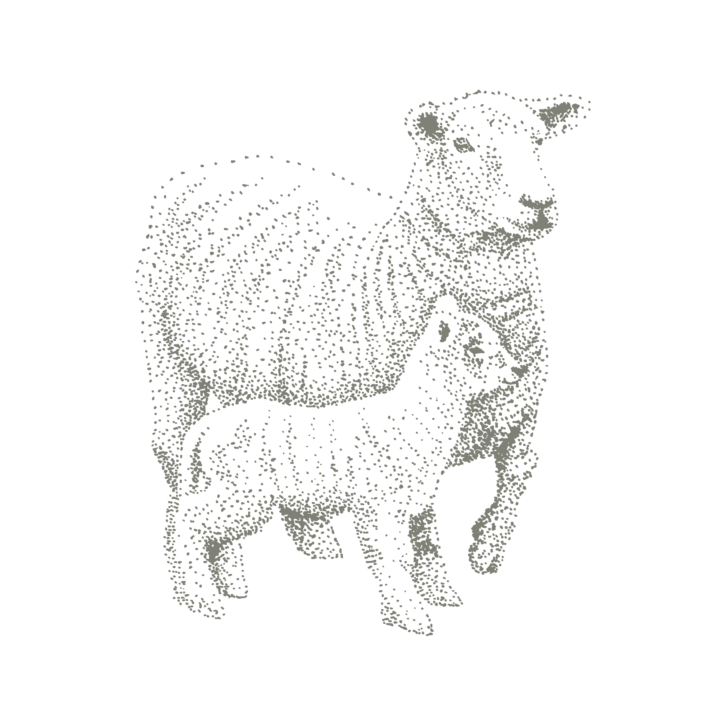 romney sheep illustration for the pure meat company branding by ditto creative, branding agency for small businesses in kent