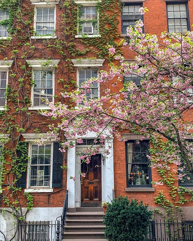 There's nothing quite like New York in the spring 🌸 #iloveny #westvillage #eastvillage #cherryblossom #nyc #ivy #stoop