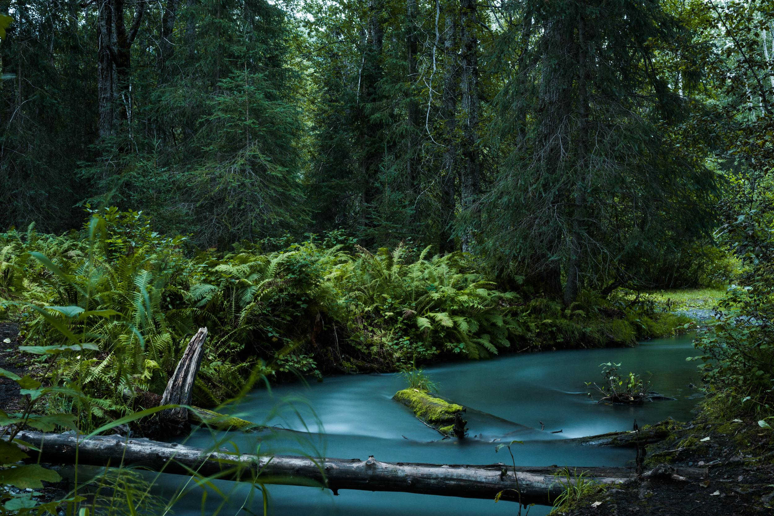 WildCreatives_Oregon_TaraShupe_5460.jpg