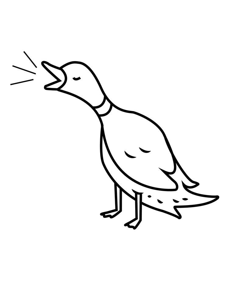 duck-club.jpg