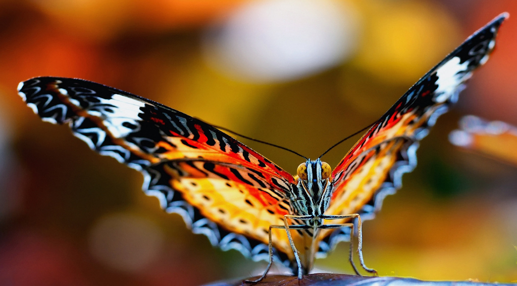 TCW-butterfly, colorful.png