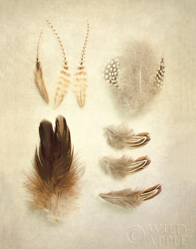 Feathers II by Elizabeth Urquhart ,published by Wild Apple and found on Art.com