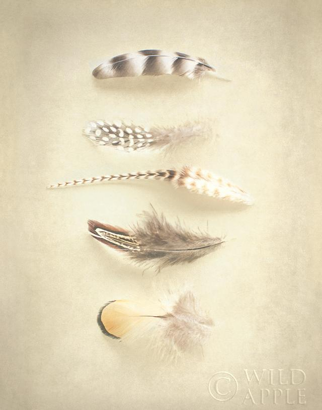 Feathers III by Elizabeth Urquhart  ,  published by Wild Apple and found on Art.com