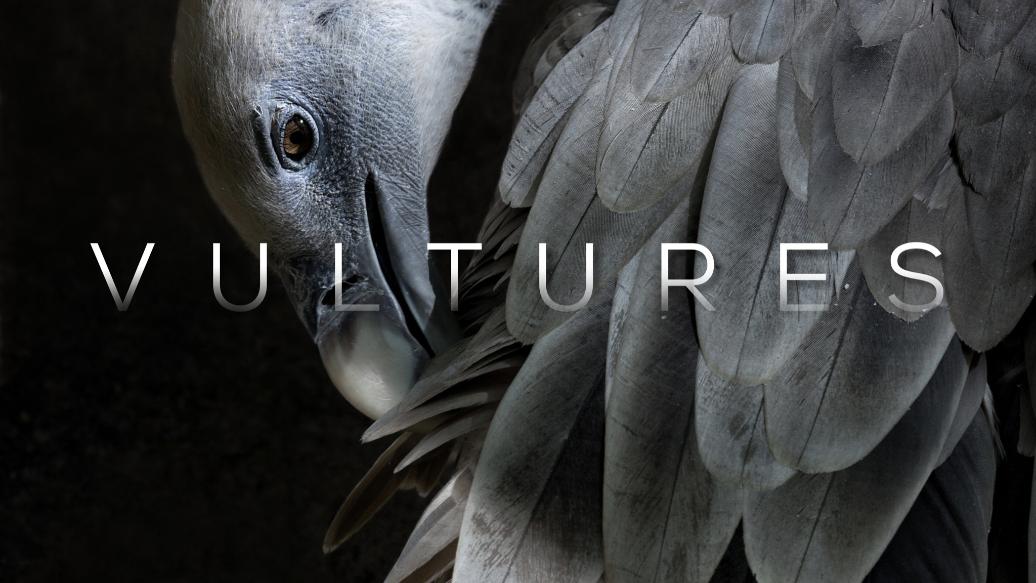 Vultures Series - Watch and Listen