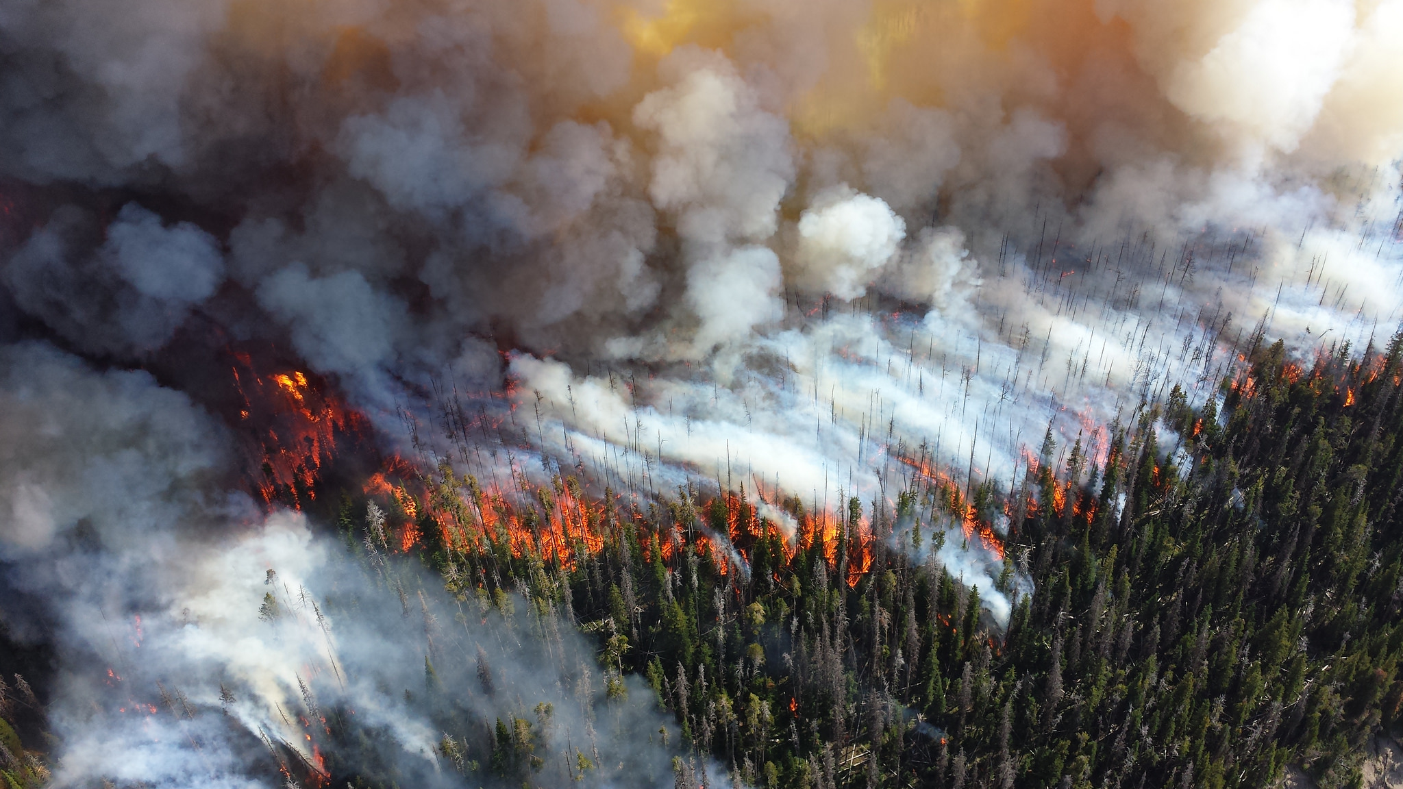 Wildfire in Yellowstone National Park.  Photo: National Park Service.