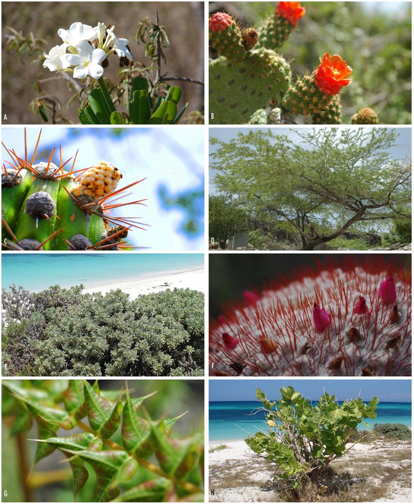 Existent Vegetation Sample