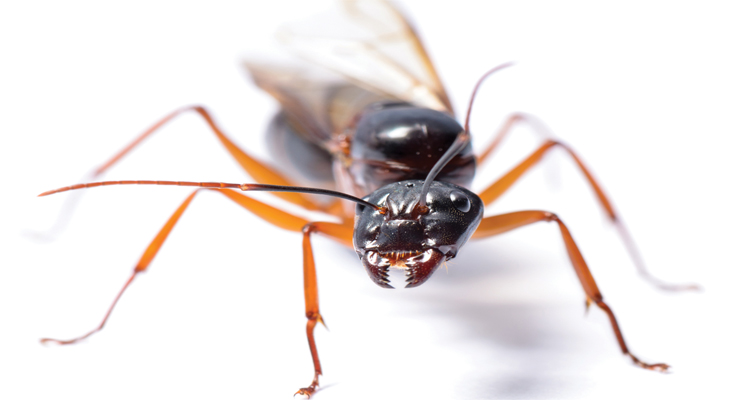 P6-Featured-ant.jpg
