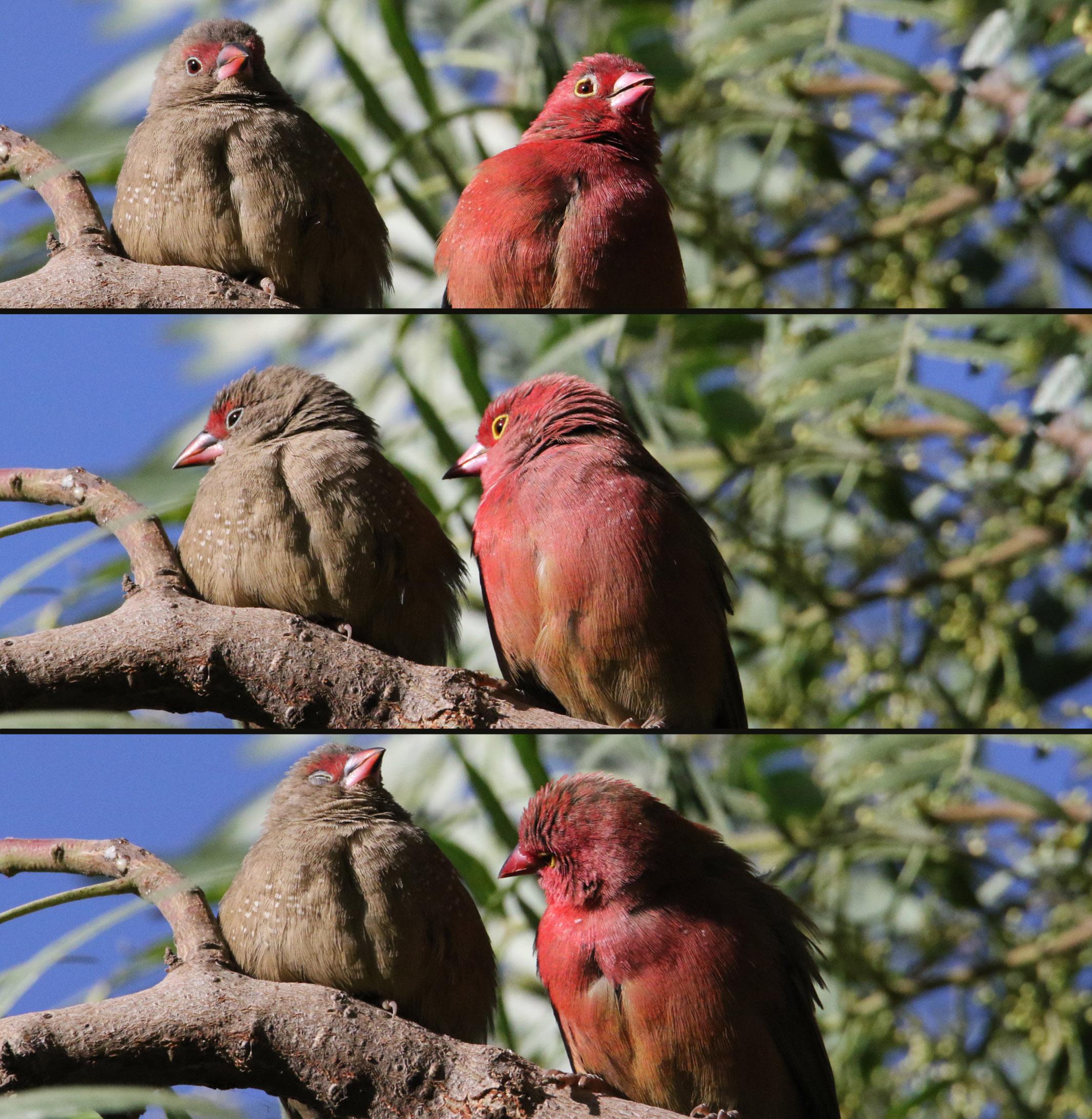 bird talk.jpg