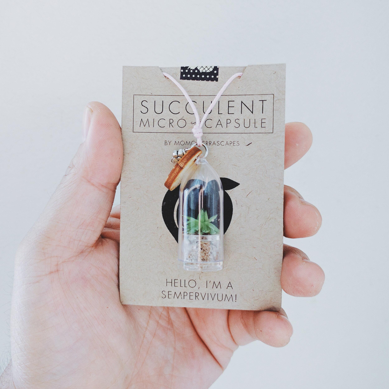 Micro Succulent Capsule!