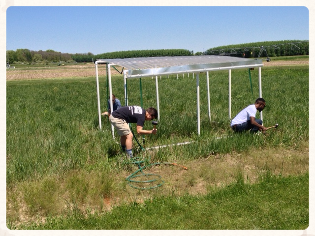 Rain reduction shelters over switchgrass @ Kellogg Biological Station