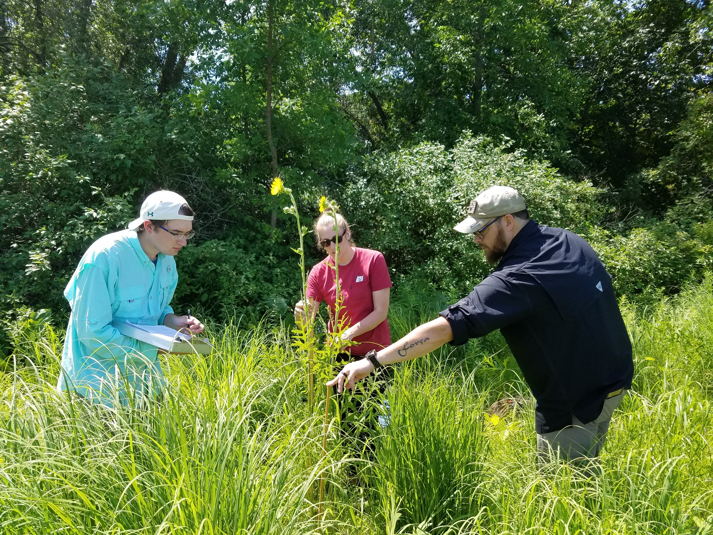 Kyle Hansen, Abby Mader and Eric Mattos (left to right) surveying plants in the oak savanna at the UWGB Cofrin Arboretum (July 2019)