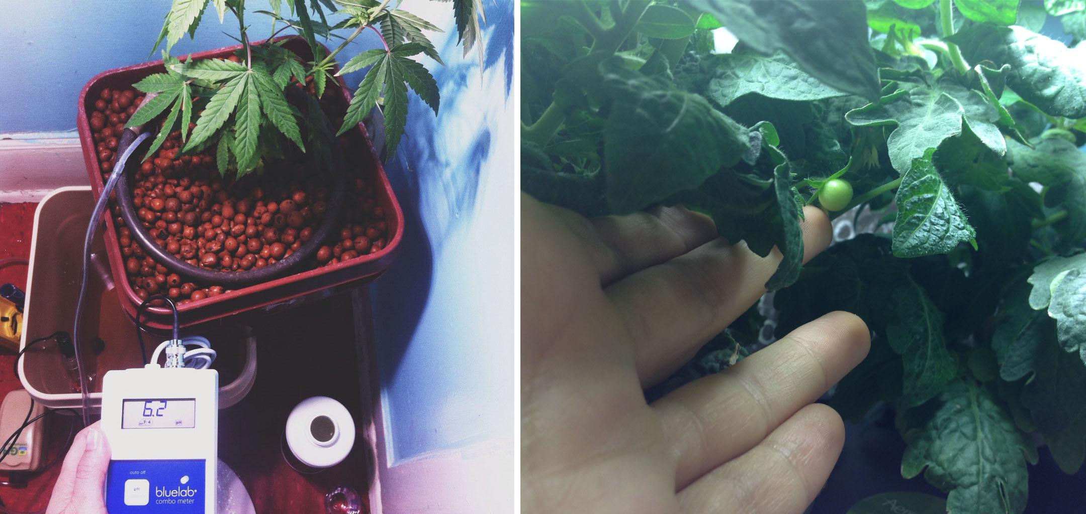 house plant process.jpg