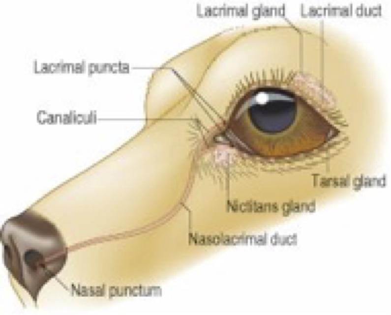 canine eye 1.jpg
