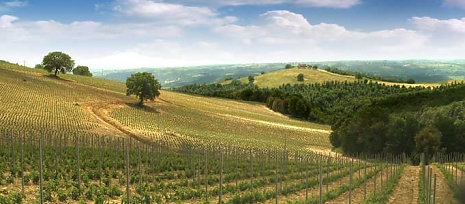 orvieto_vineyard_in_fine_wine_great_food.jpg