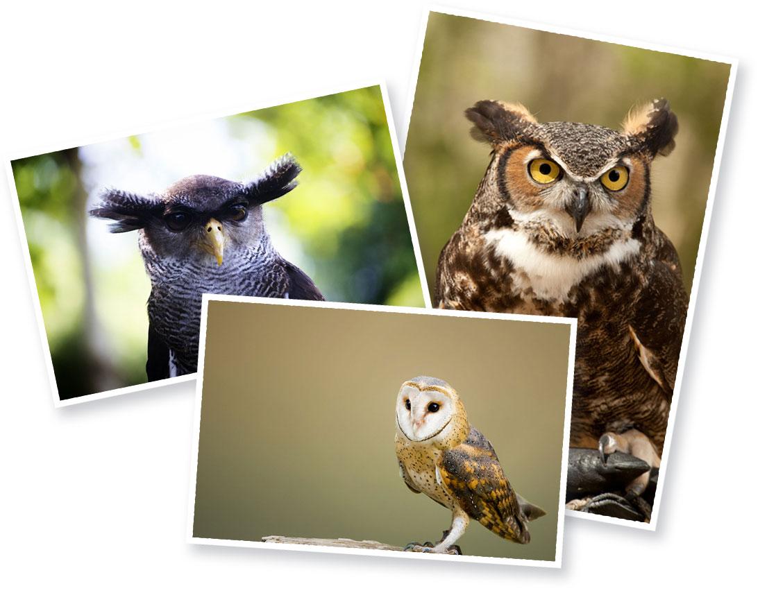 owlology-bonus.jpg