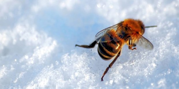 How do bees make it through the cold winter months?