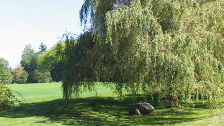 Deer Lake Park 9.jpg