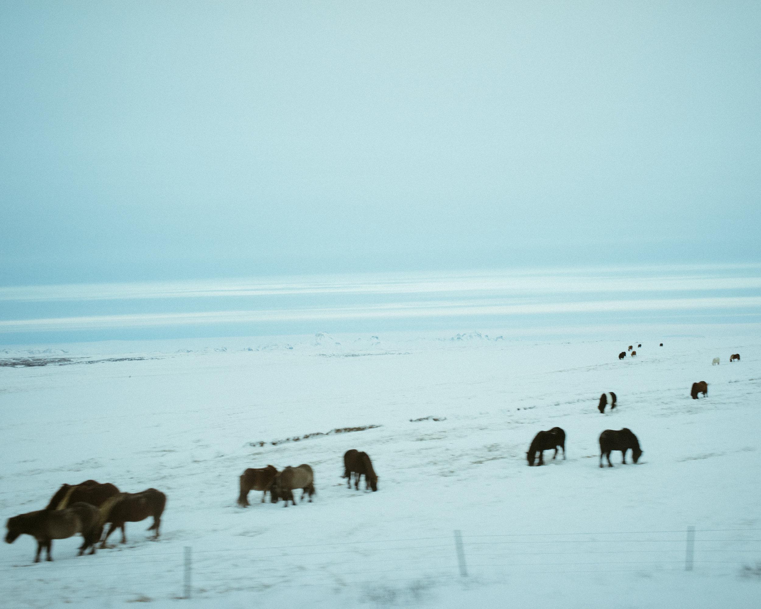 iceland_24_DSC00797.jpg