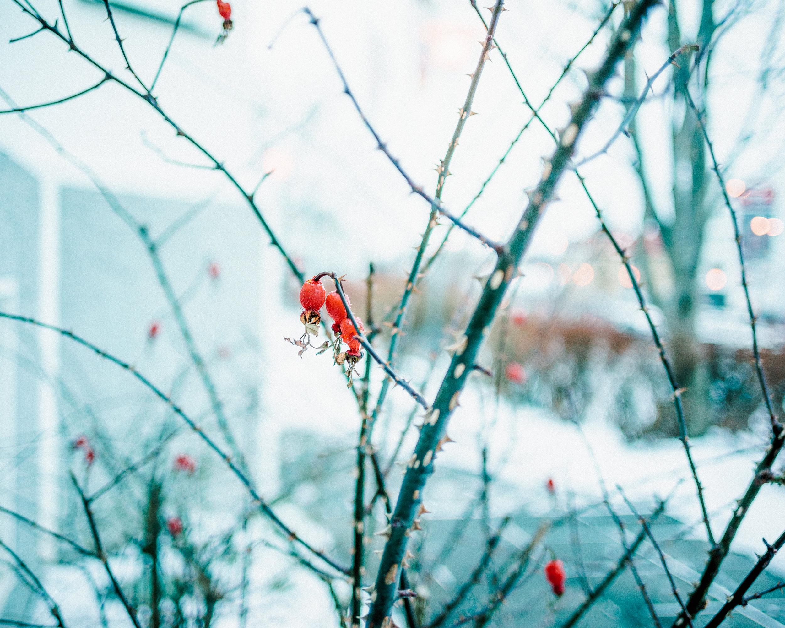 iceland_36_DSC00919-Edit.jpg