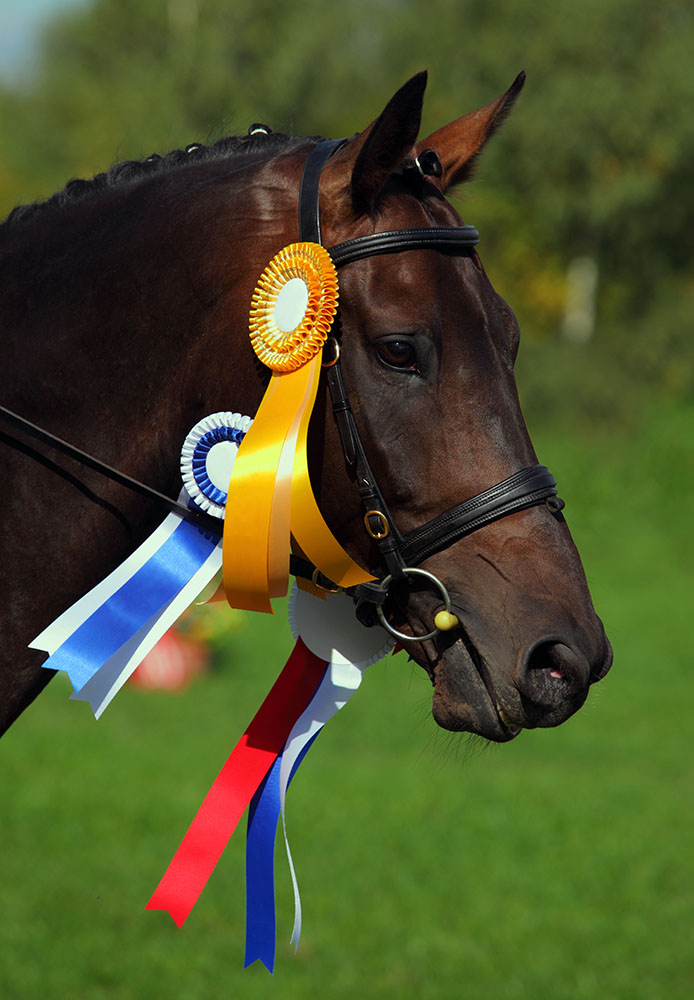 horse-competition-may-2015-york.jpg