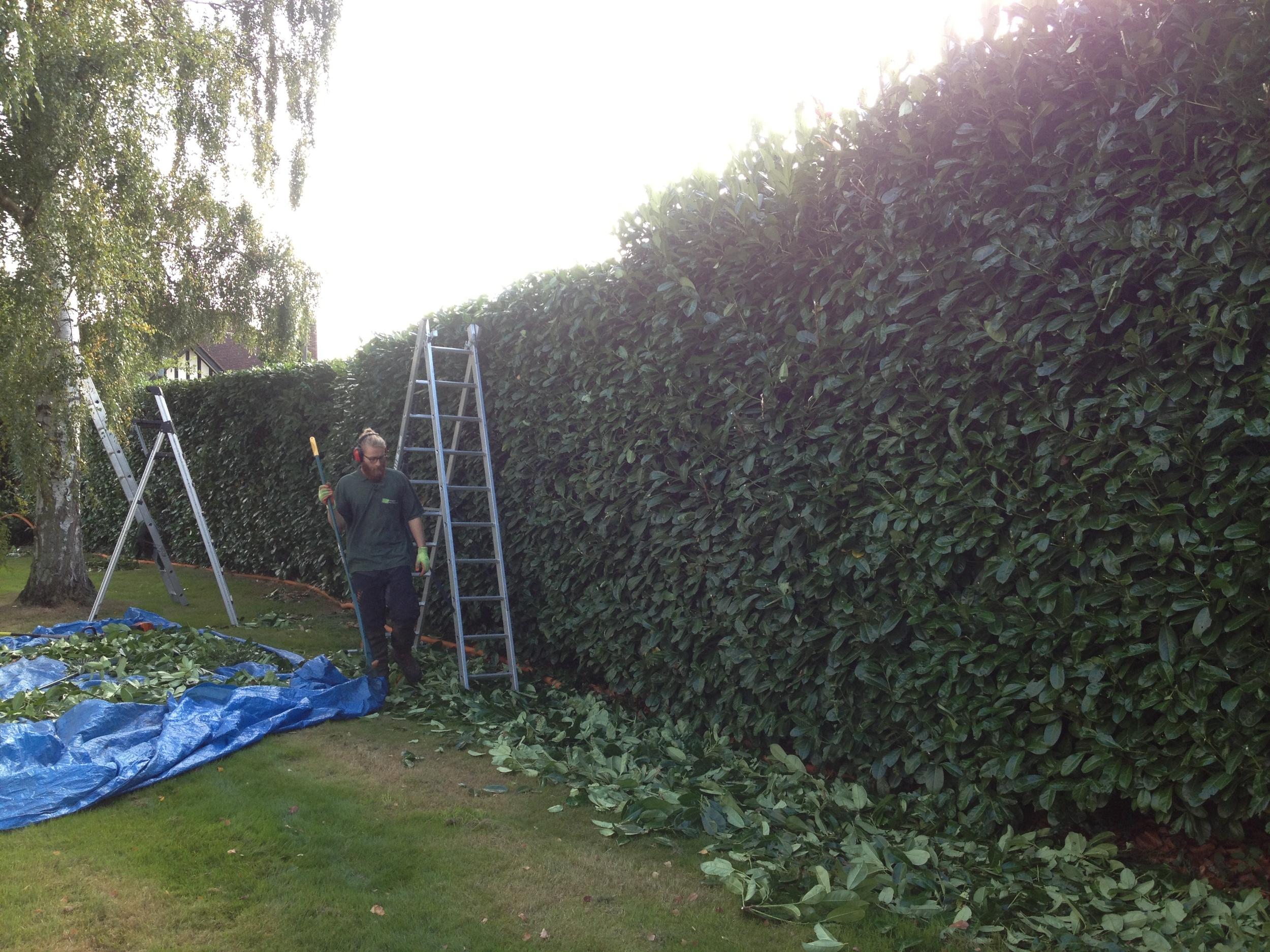 Greenacre_Trees_Landscapes_Hedge trimming 3.JPG