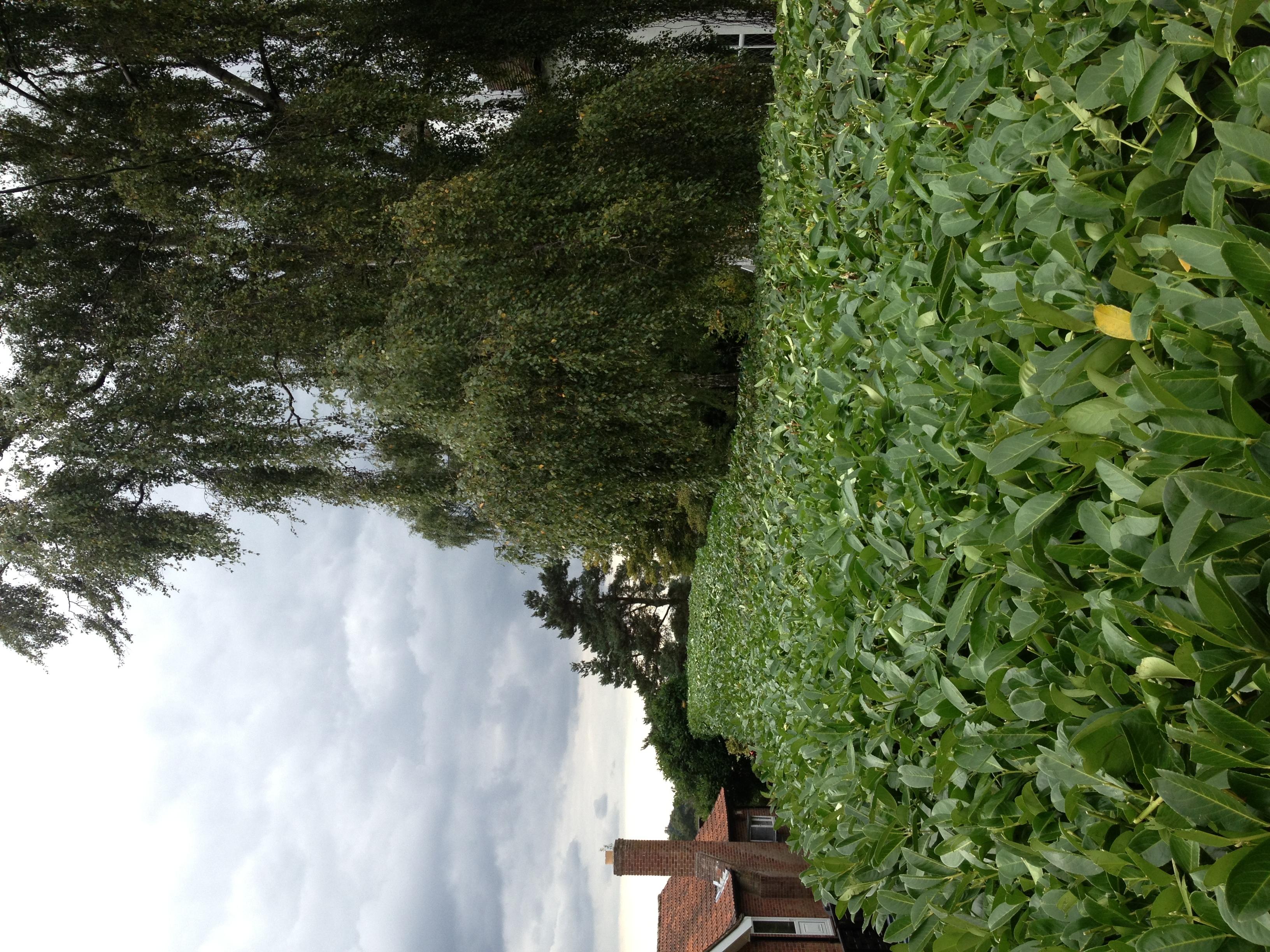 Greenacre_Trees_Landscapes_Hedge trimming 4.JPG
