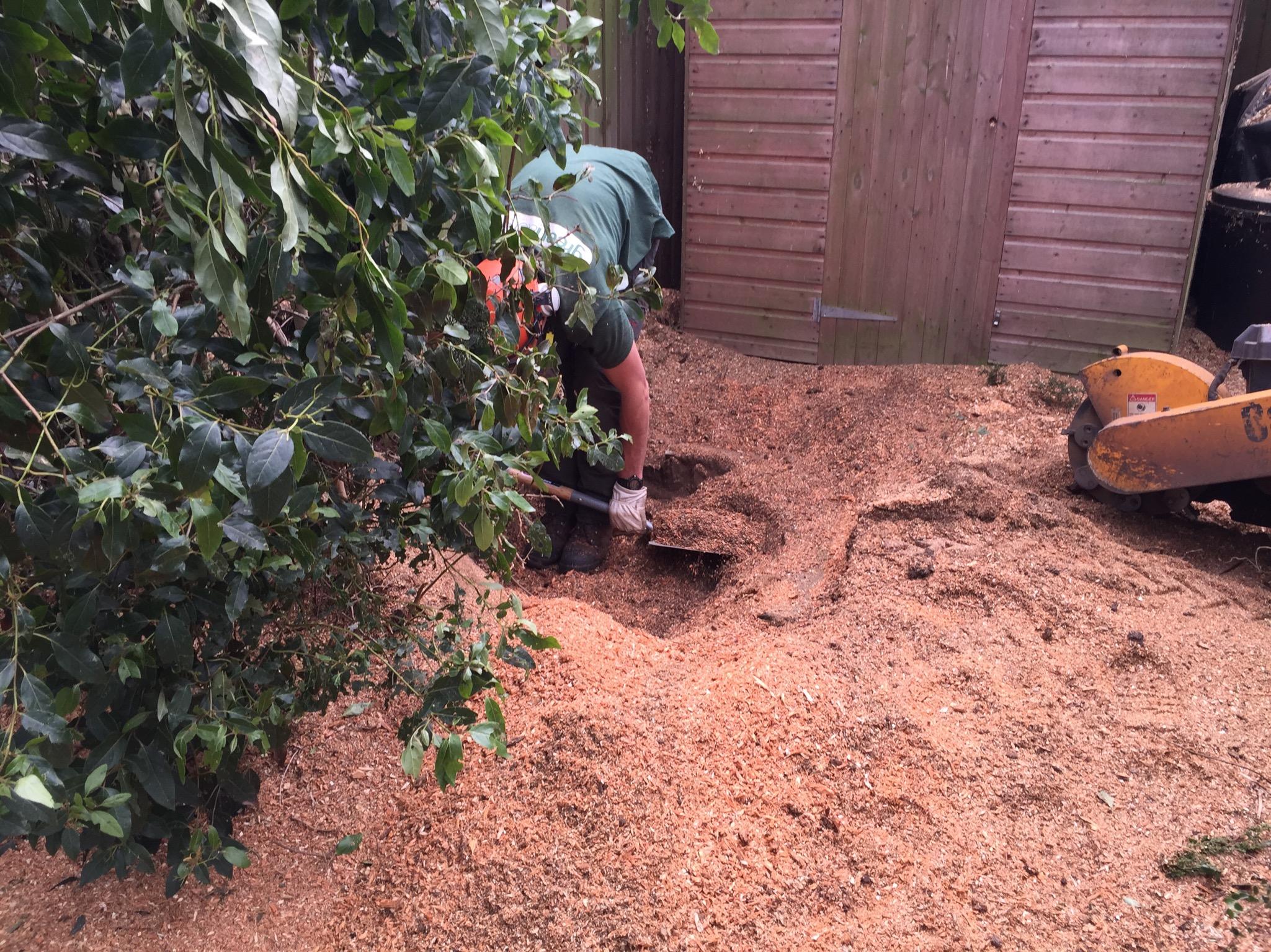 Greenacre  Stump Grinding digging out Carlton SP2010.jpg
