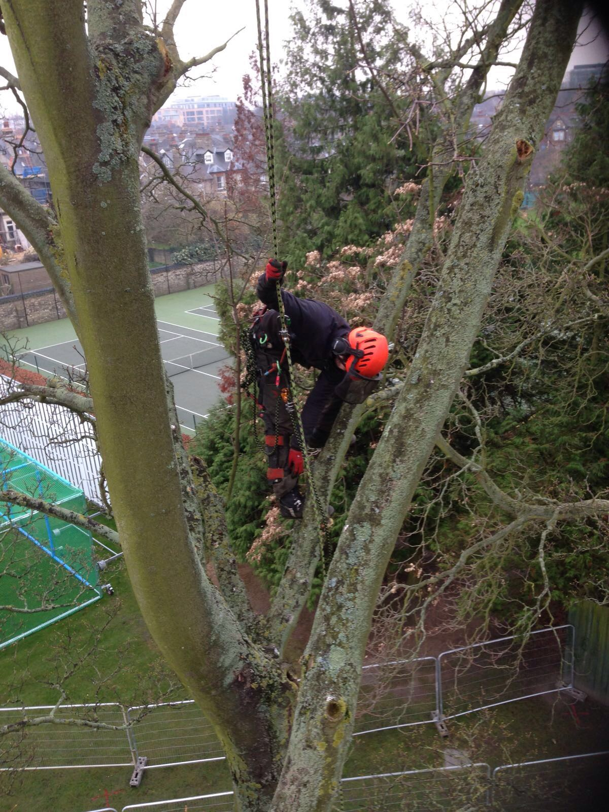 Greenacre Trees & Landscapes Ltd Tree work Cambridge University.jpg