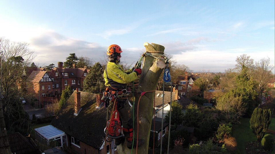 Greenacre Trees & Landscapes Ltd Drone picture of beech dismantle.jpg