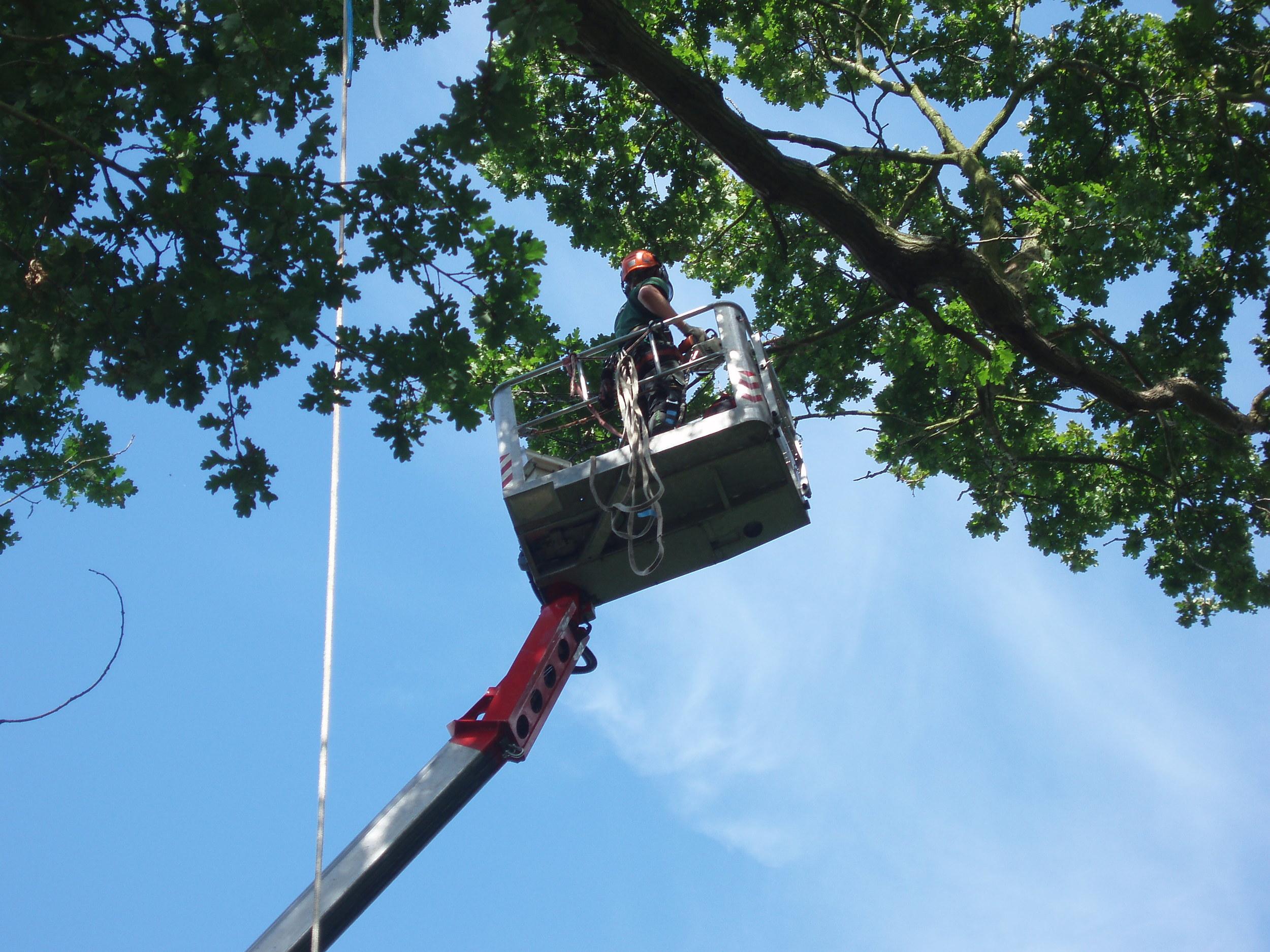 Greenacre_Trees_Landscapes_Platform work 3.JPG