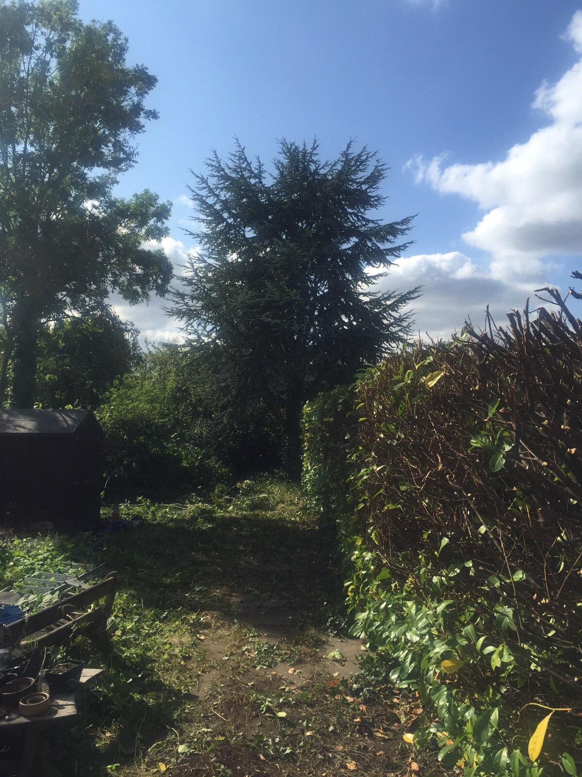 Hedge trimming 21.jpg