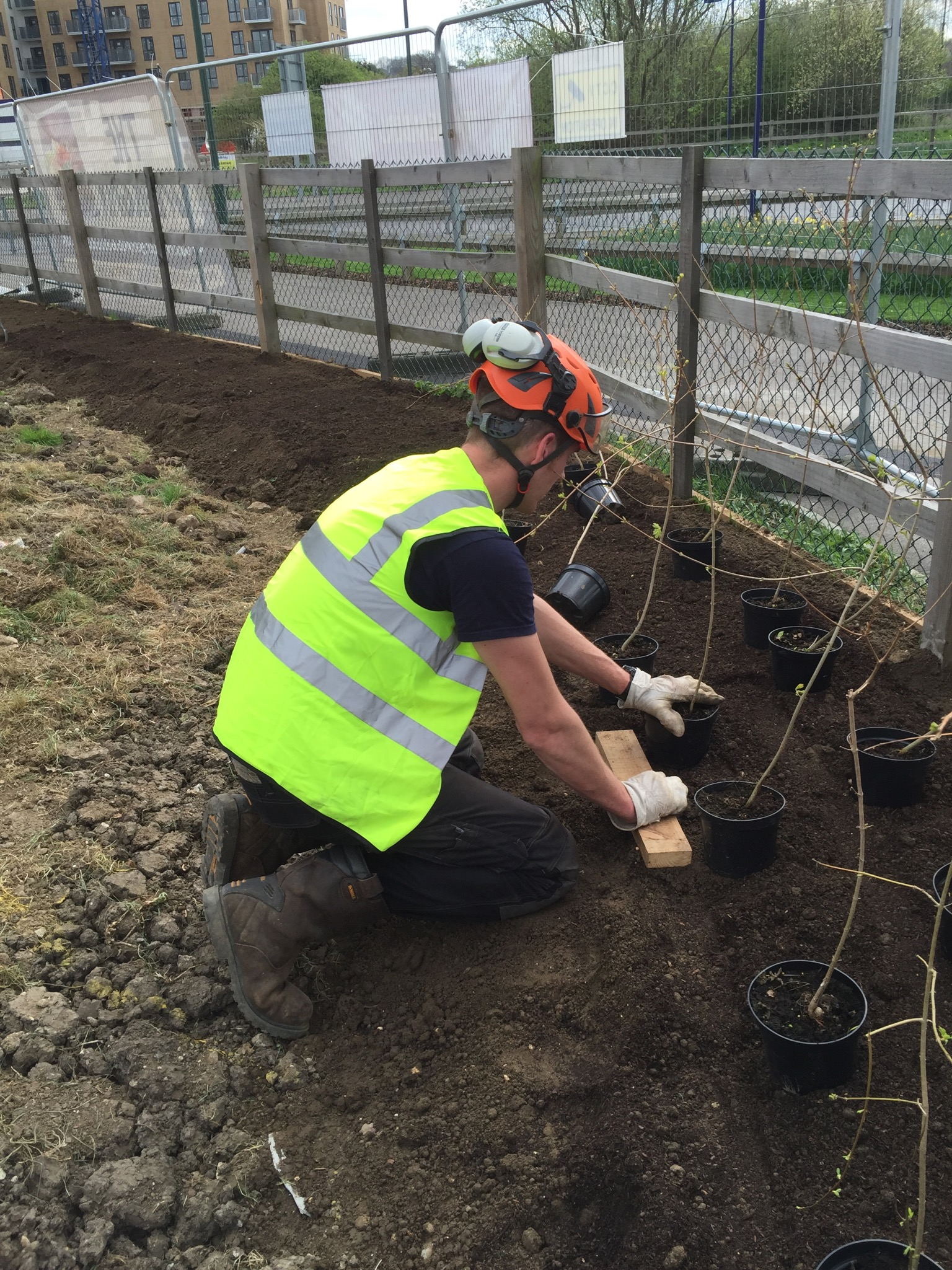 Greenacre Trees & Landscapes Ltd Commercial Site Hedge Planting.jpg