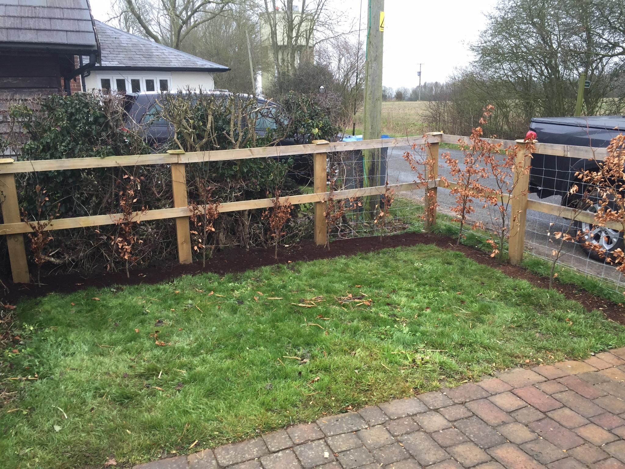 Greenacre Trees & Landscapes Ltd Beech Hedge planting.jpg
