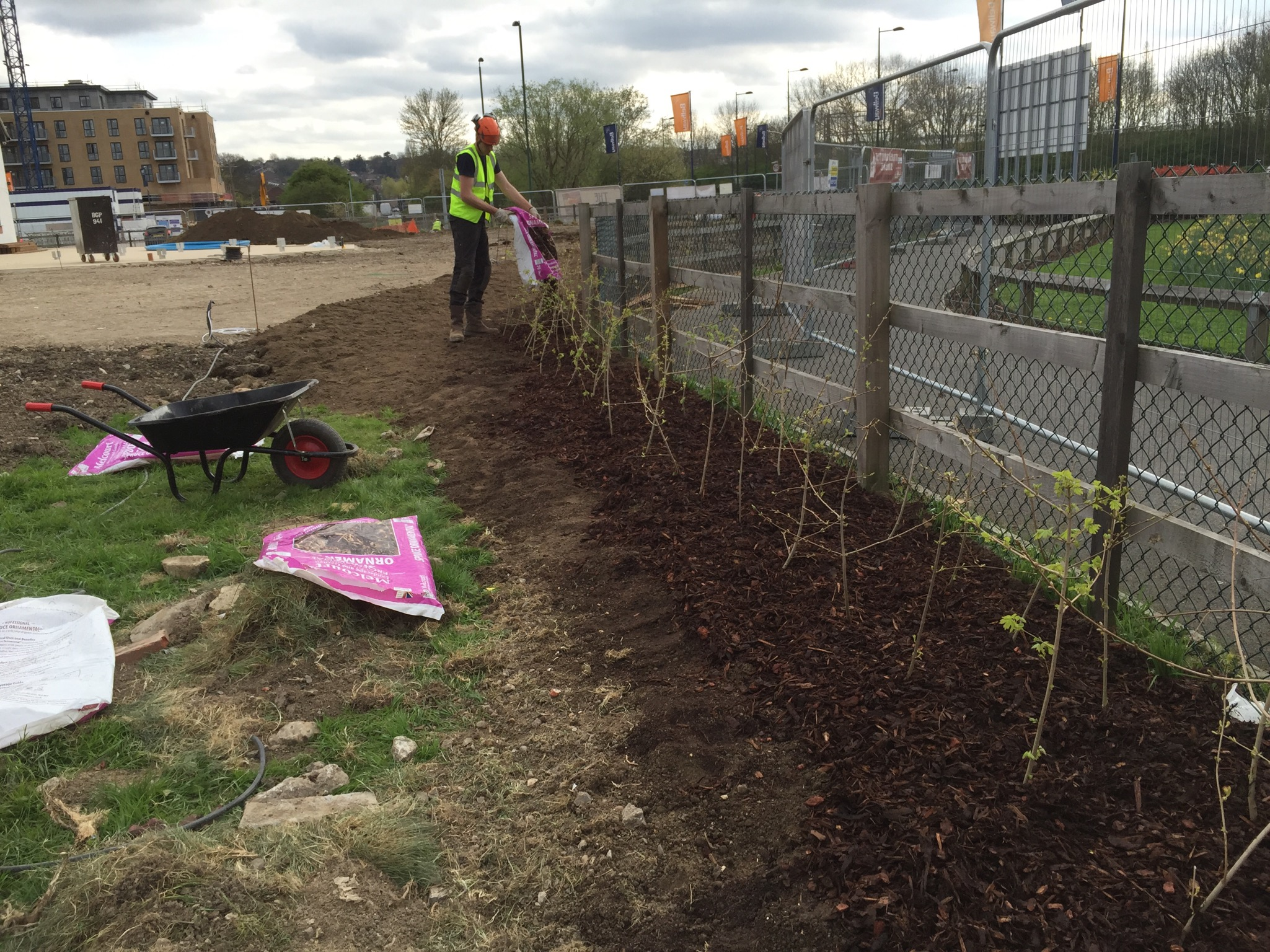 Hedge planting 18.jpg
