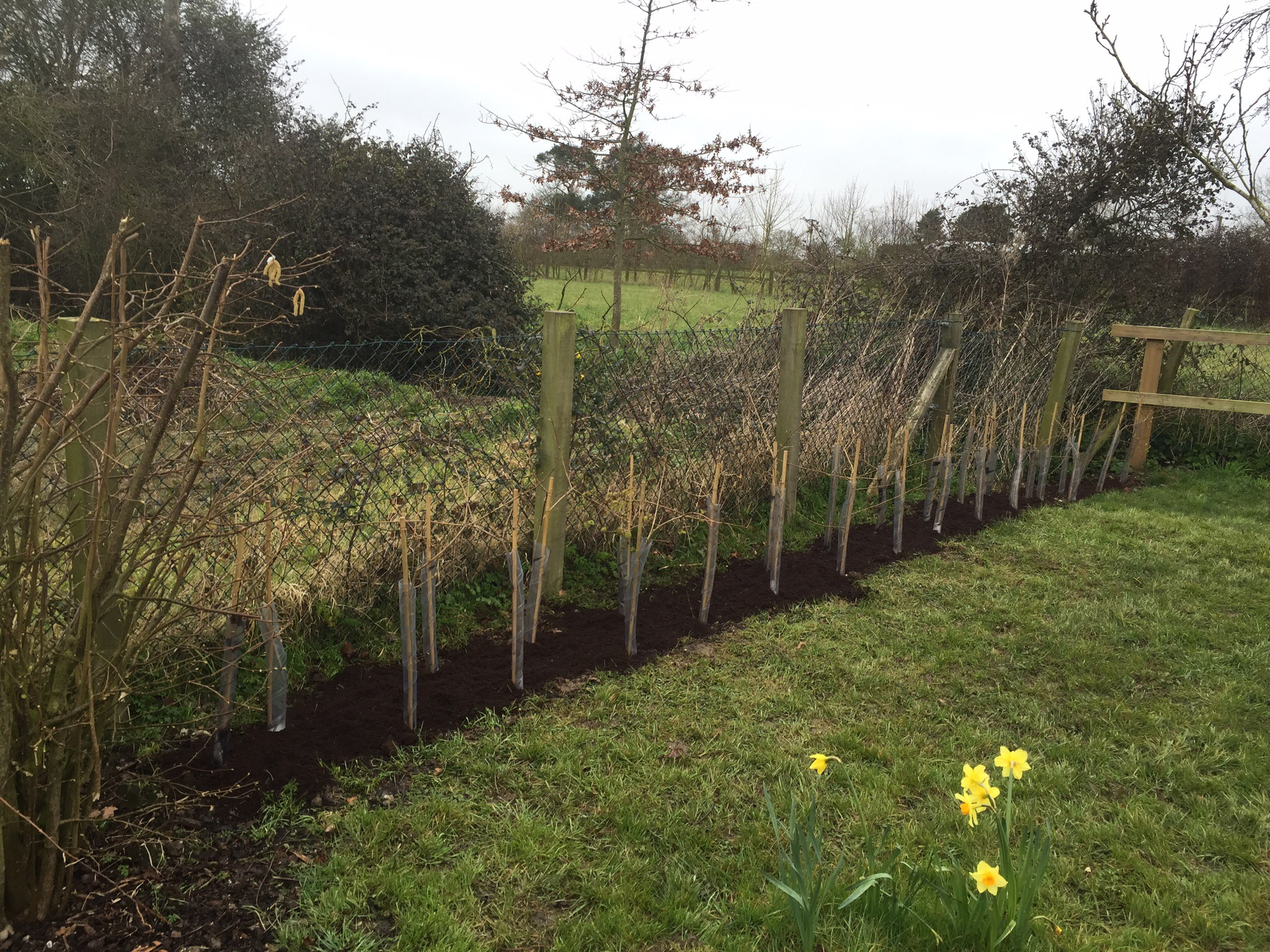 Greenacre_Trees_Landscapes - Hedge Planting.jpg