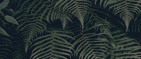 img_banner-ferns - Lala Nuss.jpg