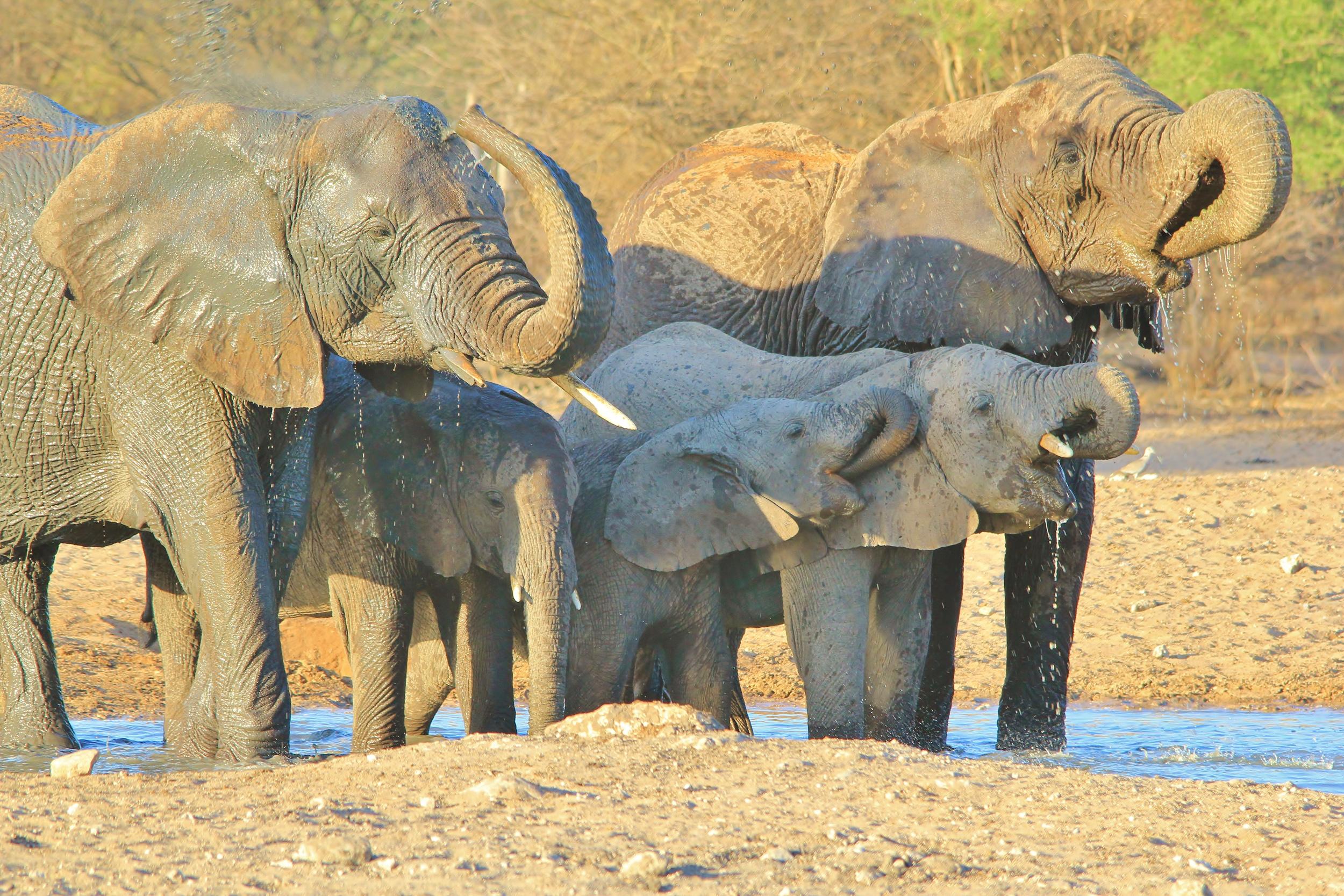 Andries-Alberts - Elephant pleasure of water_.jpg