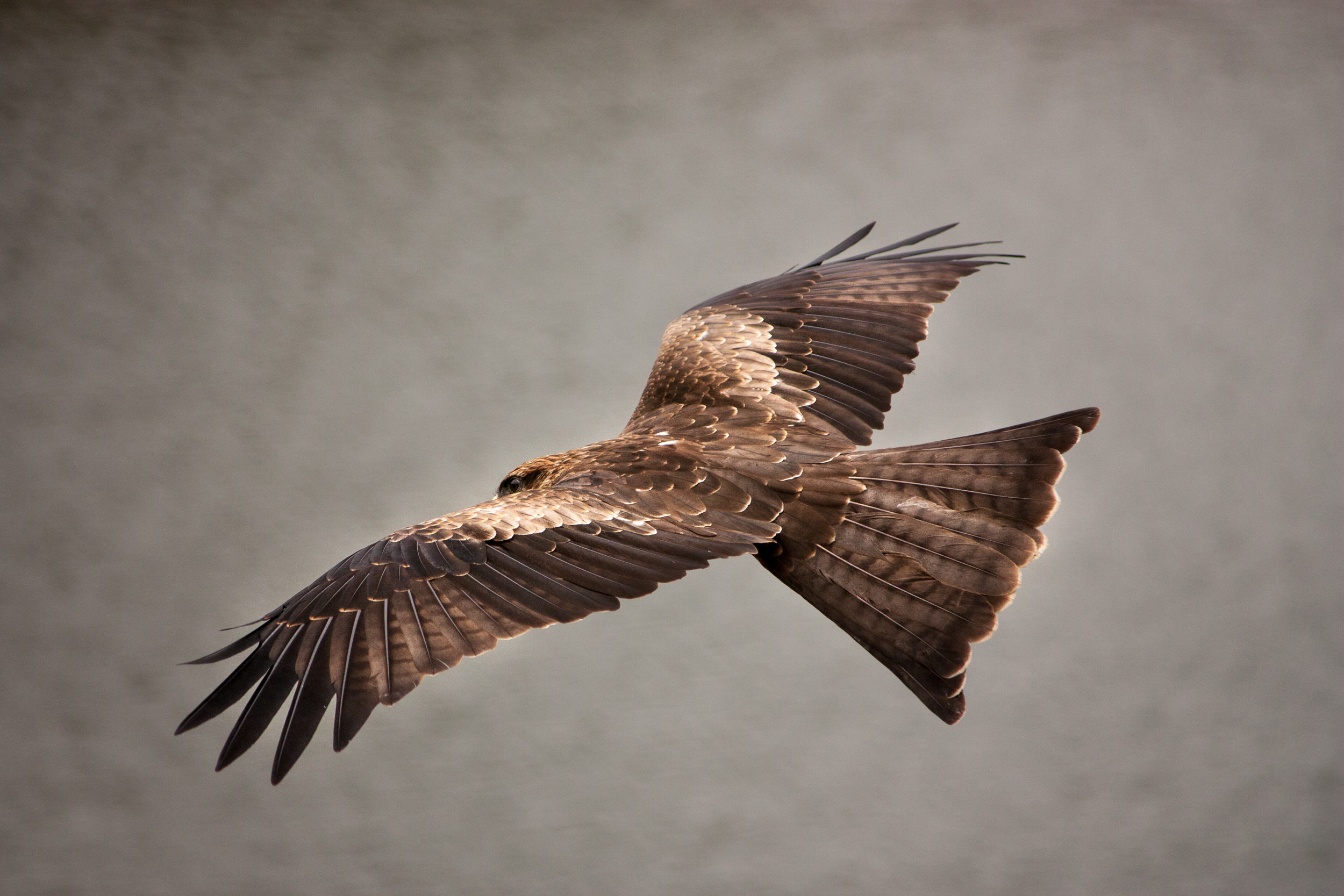 Canon 450D and EF-S 55-250 IS II... This is one of my first shots when I ventured into wildlife photography in September 2012.