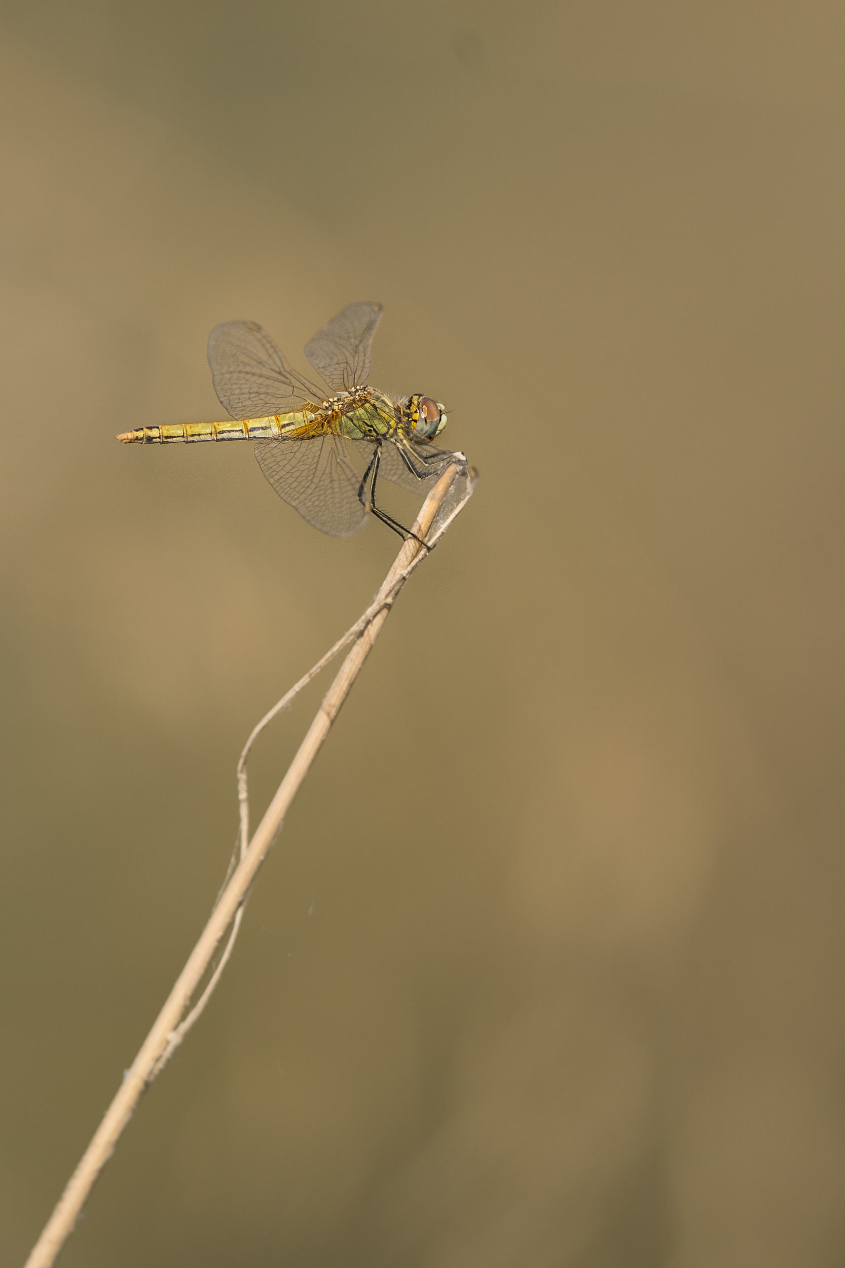 500mm at minimum focusing distance does a reasonable job at macro, without disturbing the subject.