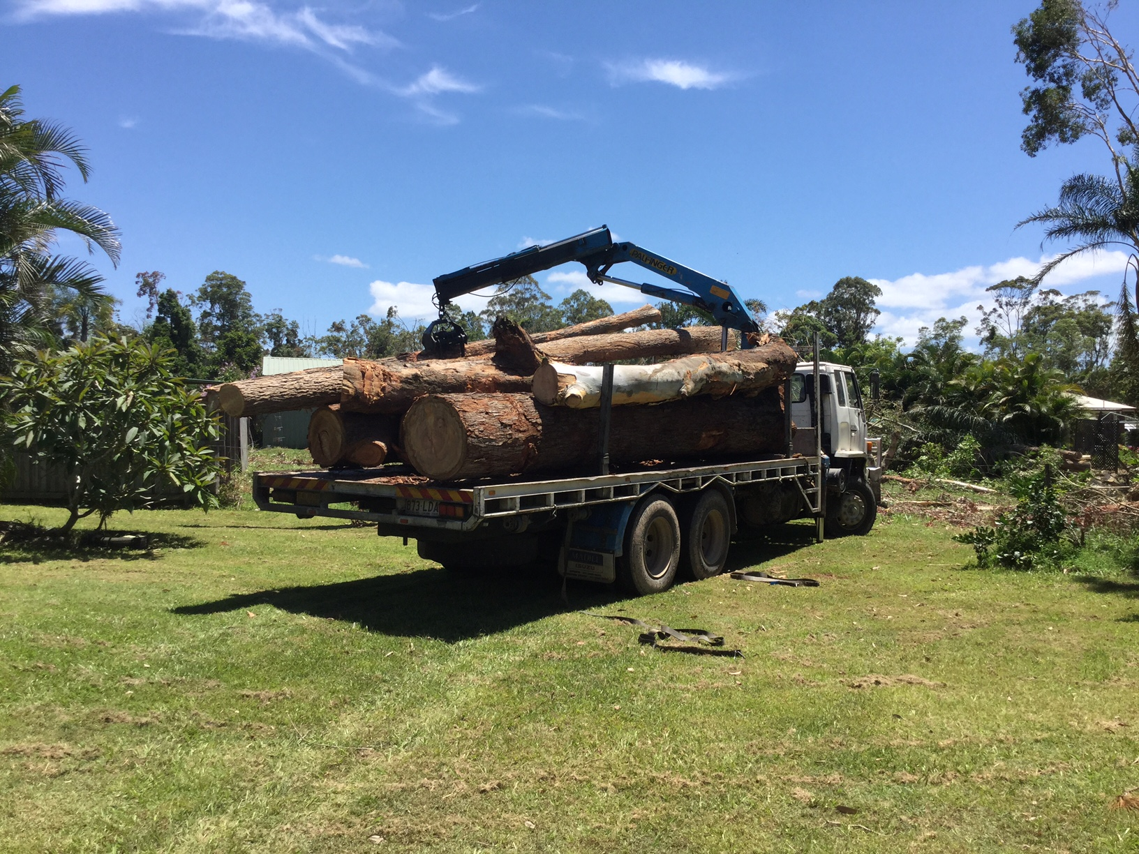 Trees removed from Ms Gottardi's parents home in Beerwah, December of last year.
