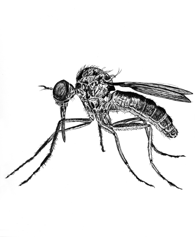 Squito.jpg