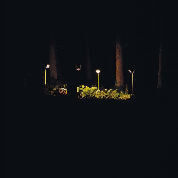trees_589.jpg